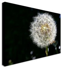 Dandelion Make A Wish At Night Canvas Prints Wall Art Picture Large Any Size