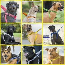 Strong As Leather Adjustable Dog Harness+Short Standard Extra Long Leads Or Sets