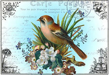 Carte Postale Bird Roses Collage Quilt Block Multi Szs FrEE ShiP WoRld WiDE (P6