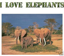 I LOVE ELEPHANTS  wall sticker  or iron on t shirt transfer. Choose