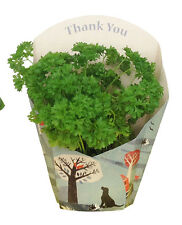 Nutley's Garden Greetings pot plant gift cards plants flowers homegrown herbs