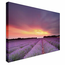 Sunset Over Lavender Field Canvas wall Art prints high quality great value