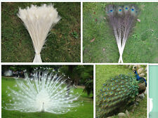 Beautiful   peacock feathers 75-80 cm 30-32 inches Free shipping