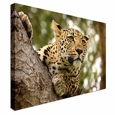 Prowling Cheetah Canvas wall Art prints high quality great value