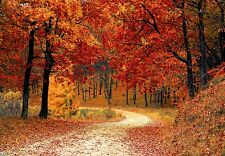 Path through an Autumn Forest Autumn Colours Trees Canvas Picture Wall Art
