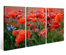 Canvas Picture 3 Pc Flowers Meadow Poppies red Flower canvas picture 9P795