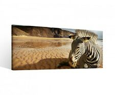 Canvas 1 Pieces Zebra Animal Africa Desert Sand Pictures Wall Stretched 9b791