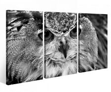 Canvas picture 3 Pc Owl Bird red eyes Night bird Canvas Picture Image 9P817
