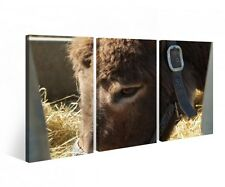 Canvas 3 PC Donkey Head Pony Animal Horse Print Pictures Wall 9B400