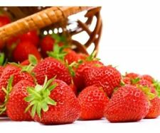 * Alpine Strawberry Plant Seeds - Fragaria Vesca - Delicious Red Fruit Berries *