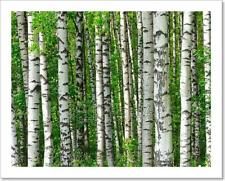 Trees In The Birch Wood Art Print Home Decor Wall Art Poster - C