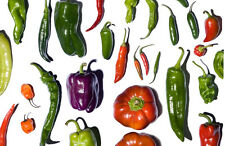 Organic peppers Seeds - Hot  chili, sweet, red, green, yellow - Fresh seeds