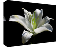 White Lily Flower - Cotton Canvas Wall Art Picture Print - ALL SIZES