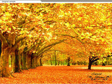 Autumn Landscape Golden leaves Wall Paper Wall Mural Print Decal Deco Indoor Au