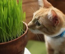 ORGANIC SPROUTING Hard Red Winter WHEAT GRASS SEEDS for Pets Cat Grass Dogs