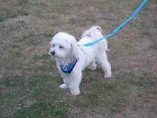 Any Size & Color Vest Soft Harness & FREE Matching Leash Set! Low Price $6.00