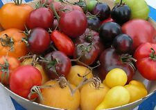 Heirloom Tomato Seeds (and more) : Choose from 60 Varieties