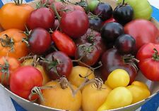Heirloom Tomato Seeds (and more) : Choose from over 75 Varieties