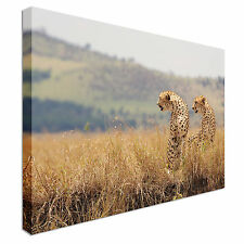 Cheetah Brothers Masai Canvas Wall Art prints high quality
