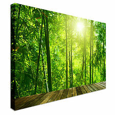 Asian Bamboo Forest With Morning Sunlight Canvas Wall Art prints high quality