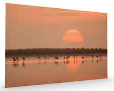 Flamingos at Sunrise Stretched Canvas