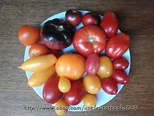 Tomato MEATY MIX 12 Varieties (separatelly packed) Heirloom Organic Seeds