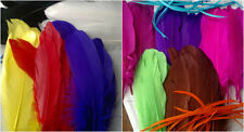 Pack of 20 Large  Goose Feathers - Approx 5-7 inches