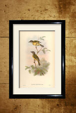 John Goulds Birds 10 pictures and poster