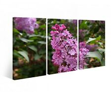 Canvas 3 pc Flowers Lilac Tree Plant Flower Print Pictures Wall Picture 9B311
