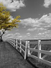 Black White Yellow Tree Landscape Wall Art Home Decor Matted Picture