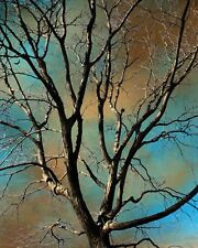 Brown Blue Modern Contemporary Tree Wall Art Home Decor Matte Wall Picture