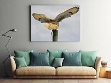 Framed Canvas Stretched Print Eagle Owl Feather Owl