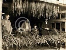 1916 BOWLING GREEN KY TOBACCO DRYING CHILD LABOR PHOTO
