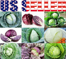 ORGANICALLY GROWN Cabbage Seeds Heirloom NON-GMO Flat Dutch Red Mammoth Savoy US