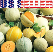25+ ORGANIC Melon Sweet Summer Mix Seeds Honeydew Heirloom NON-GMO Flavorful!!!