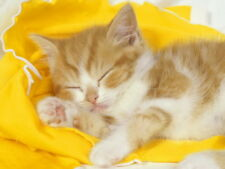 Cute Sleeping Kitten Funny Cat Animal Gigantic Print POSTER
