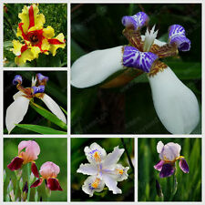 100 Pcs Iris Orchid Plant Seeds, Indoor Potted Iris Seeds, Beautiful Choice