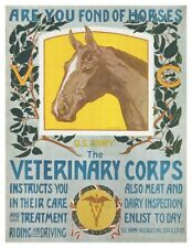 World War I US Army Cavalry Veterinary Corps Horse Care Poster