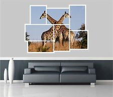 Huge Collage View Giraffes On Safari Wall Stickers Mural Wallpaper 219