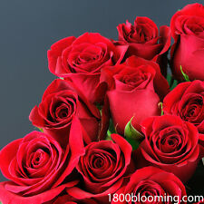 Fresh Cut Red Roses, Flower Delivery, Bouquet-Event-Party-DIY-Bulk (12 or 24ct)