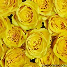 Fresh Cut Yellow Roses, Flower Delivery, Bouquet-Event-Party-DIY-Bulk (12 or 24)
