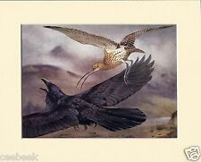 Curlew Chasing A Raven Mounted 1930s Bird Print Black Cream or White Mounts