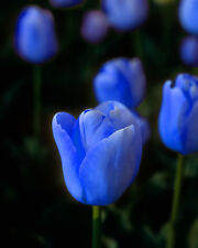 Blue flower matted picture wall decor fine art photograph