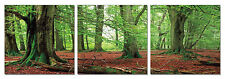 FRAMED Hot Large Modern Contemporary Canvas Wall Art Print Painting Forest Trees