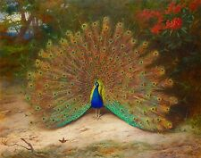 """Archibald Thorburn : """"Peacock and Peacock Butterfly"""" (1917) — Fine Art Print"""