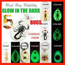 Real Crab Beetle Black Scorpion Insect Glow In the Dark Key Chain Ring Keyring