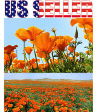 500+ SEEDS California Poppy Wildflower Seeds Easy to Grow - free shipping USA
