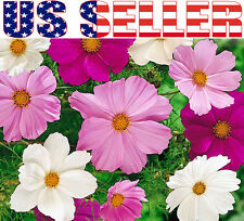 100+ Cosmos Bipinnatus Sensation Mix Seeds Pink White Flower Colorful Decorative