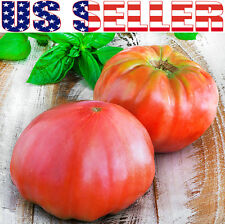 50+ ORGANIC Brandywine Red Tomato Seeds Heirloom NON-GMO Productive Large!!