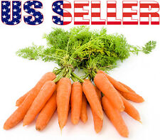 200+ ORGANIC Nantes Scarlet Carrot Seeds Heirloom NON-GMO Sweet Crisp Juicy!!!